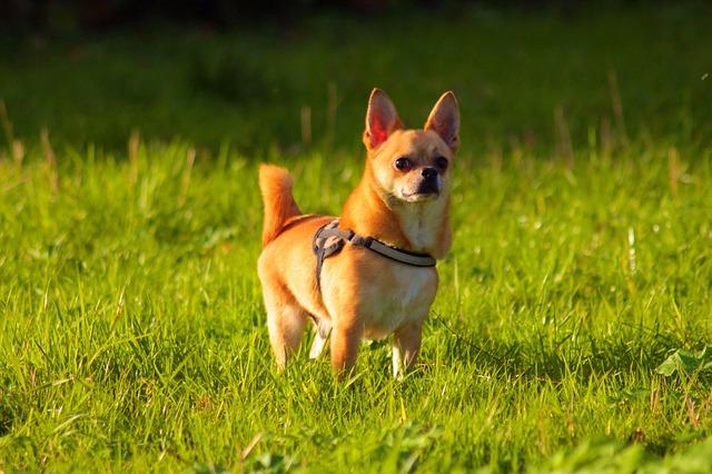 Quelques conseils pour jouer avec votre chien en été